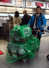 Wrapped up Cats (sjrankin) Tags: sanfrancisco california cats animals northerncalifornia sfo edited sanfranciscoairport catcarriers 11april2016