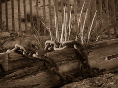 Enchaines (CTfoto2013) Tags: wood light shadow beach grass sepia vintage lumix chains seaside sand rust capecod details sable ombre retro panasonic lumiere cape cod plage chaines bois wellfleet rouille herbes marconibeach marconistation gx7 micro43 mirrorlesscamera