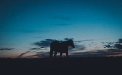 Horse Sunset Solo (Zach_Woolf) Tags: sunset horse silhouette canon angle wide solo 5d canon5dmarkii