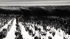 incredible (Rodrigo Alceu Dispor) Tags: bw tree fx incredible