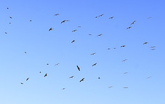 Be Free (Landreth1) Tags: blue sky birds 50mm fly flying nikon seagull free cielo fx gaviotas libre vuelo volar befree 14g