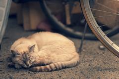 (Onejoshuatree) Tags: west animal japan cat snap hiroshima     onomichi
