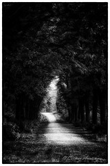 Little Red riding hood-1.jpg- on explore 24 April 2016 (Carmen Auriemma) Tags: wood trees light white black alberi canon tunnel explore littleredridinghood frame l luce bosco 6d cappuccettorosso