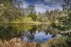 Wallington, Northumberland (DM Allan) Tags: water countryside pond northumberland nationaltrust wallingtonhall