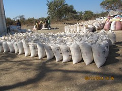 Bags of maize at the Food Reserve Agency Depot in Kasiya, Pemba district, Southern Zambia. Credit: Friday Phiri/IPS (IPS Inter Press Service) Tags: africa farming hunger agriculture maize zambia foodsecurity