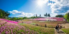 LHM_0148-Edit (Leo Hartadi) Tags: park nature japan landscape saitama chichibu seibu