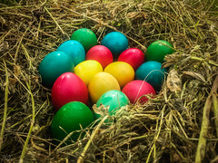 Easter eggs! (Hasan Yuzeir) Tags: blue red color green chicken grass yellow easter phone egg straw samsung galaxy hasanyuzeir