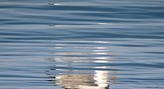 Fragmented (Gert Vanhaecht) Tags: blue light color colour reflection bird nature water birds animal yellow canon reflections coast availablelight minimalism waterreflection waterreflections canonpowershotsx700hs gertvanhaecht