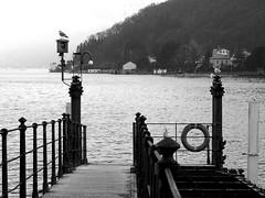 ten steps (samuele.dangelo) Tags: bw white lake black water monochrome outdoor porto ceresio