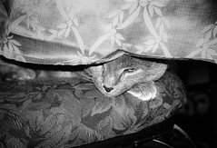 old man gonzo (SopheNic (DavidSenaPhoto)) Tags: blackandwhite bw film monochrome cat iso400 35mmfilm hp5 ilford gonzo 50mmf18 selfdeveloped id1111 canonelan7e
