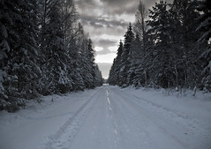 "End of the road (Vidar ""the Viking"" Ringstad, Norway) Tags: trees winter shadow sky snow cold nature norway forest norge woods frost cloudy outdoor norwegen end slippery pinewood endless trandum snowontrees icecold winterroad winterforest trandumskogen canoneos5dmkiii winterbature"
