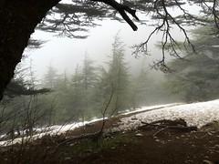 The Cedar Forest in Maasser al-Shouf, Lebanon (quaerentia) Tags: winter lebanon forest cedars