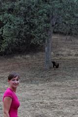 Niedźwiedź czarny | Black Bear
