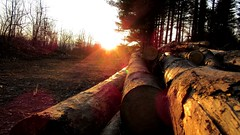 Logs (DPozega) Tags: trees sunset nature forest log fallen