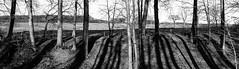 2016-01-M Monochrom-L1009324-web (Meine Sicht) Tags: winter shadow bw weide sw monochrom schwarzweiss sonne wald schatten bergischgladbach fotokunst rauen leicam obersteinbach baumnatur wwwrauenfotode
