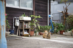 (23fumi) Tags: cat 50mm alley sony    nex6 sel50f18 e50mmf18oss