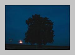 Der Baum im August (blasjaz) Tags: plant derbaum hessen pflanze pflanzen august baum linde hesse homberg vogelsberg botanik tilia tiliacordata mondaufgang winterlinde vogelsbergkreis hombergohm dannenrod dannenrodhomberg hombergdannenrod