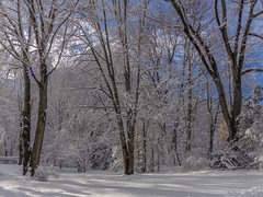 DSC01620-2 (johnjmurphyiii) Tags: winter usa snow connecticut shelly cromwell originaljpeg johnjmurphyiii 06416 sonycybershotdsch90