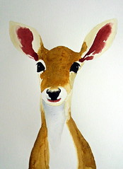 Deer, by Raquel - DSC02187 (Dona Minúcia) Tags: cute art face animal watercolor painting paper arte cara deer study fofo pintura aquarela gracinha veado
