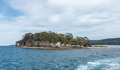 Isle of the Dead, Tasmania (tik_tok) Tags: history water island isleofthedead australia graves tasmania worldheritage portarthur convicts massgrave portarthurhistoricsite