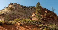 Leave Only Footprints (Ron Drew) Tags: park utah nationalpark nikon zion zionnationalpark d800 checkerboardmesa