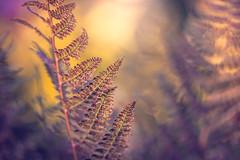 Tiny Fern (Elizabeth_211) Tags: plant fern macro nature bokeh tennessee 100mm jacksontn westtn sherielizabeth