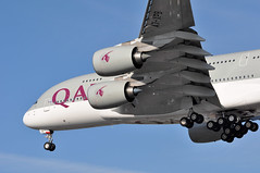 QR0003 DOH-LHR (A380spotter) Tags: london heathrow engine landing belly finals landinggear airbus a380 arrival powerplant approach 800 qr lhr qatar undercarriage qatarairways qtr egll turbofan nosegear  27r maingear enginealliance gp7200 runway27r shortfinals bodygear dohlhr gp7270 a7apb qr0003 msn0143