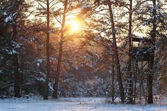The Final (H. Eisenreich) Tags: schnee trees winter sunset sun snow nature sonnenuntergang hans pines fujifilm sonne bume kiefern hochsitz huntersshelter xt1 jgersitz jgerstand eisenreich