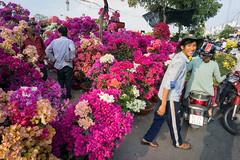 selling bourgainvillea (kuuan) Tags: flower focus vietnam mf manual tet saigon a7 voigtlnder hcmc skopar colorskopar bourgainvillea leicam district7 sonya7 f421mm colorskoparf421mm voigtlndercolorskoparf421mm