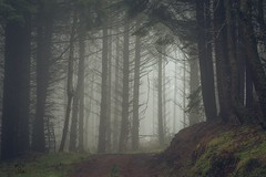 If you go down to the woods today... (Augmented Reality Images (Getty Contributor)) Tags: longexposure trees winter mist pine forest canon woodland landscape scotland track perthshire spooky