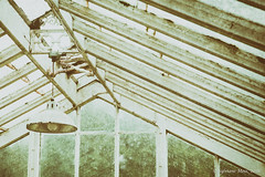 In the greenhouse (Sylviane Moss) Tags: old analog greenhouse
