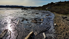 Lake driftwood (oldhiker111) Tags: driftwood folsomlake