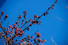 026:365 - 02/11/2016 - Twigs and Berry (Shardayyy) Tags: nikon potd photoaday twig 365 d800 project365 365project shardayyyphotography shardayyyyphotographycom