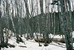 Winter Woods (Rachael.Robinson) Tags: trees winter canada color film 35mm island woods fujifilm campobello