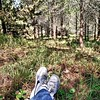 #Saturday #morning at the  #forest