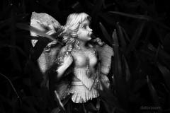 Descending Angel (Distorzoom) Tags: blanco angel y negro angelcaido blacknadwhite descendingangel