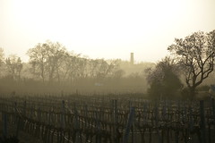 Vinyes i torre de l'aigua de la Bleda, el Penedès.. (Angela Llop) Tags: landscape spain catalonia vineyards dust penedes