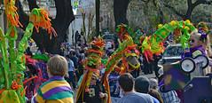 Dragons Spotted on Napoleon Avenue (BKHagar *Kim*) Tags: carnival people kids children kid colorful child neworleans dragons parade celebration nola mardigras walkingkrewe bkhagar kreweoftucksparade dragonsofneworleans
