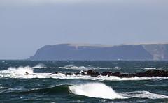 Troup Head in Aberdeenshire, Scotland (Michael Leek Photography) Tags: ocean sea nature weather coast scotland rocks waves aberdeenshire gale cliffs coastal coastline macduff headland morayfirth crovie trouphead northeastscotland gamriebay scottishcoastline michaelleek michaelleekphotography