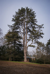 Elm (Katie J Marsden) Tags: park england west tree landscape photography nikon south documentary arboretum gloucestershire westonbirt d3000