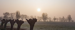 Pruned (Jorden Esser) Tags: trees sun tree grass landscape dawn frost branches twigs wintertrees pollard wintermorning palelight htt sundawn pollarding htmt nederlandvandaag