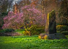 Signs of Spring (James Neeley) Tags: london spring magnolia hydepark hydeparkcorner jamesneeley