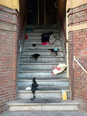 It's over. (Jacek.NL) Tags: brick netherlands up wall stairs bag underwear bra row hague clothes plastic relationship argument conflict hm breaking eviction breakup violent quarrel evicted reproach