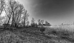 Flood plains along the river Waal 3 (Rens Timmermans) Tags: blackwhite landschap niksilverefexpro sigma1224f4556dg canon5dmk3
