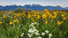 Antelope Flats (Jeremy Duguid) Tags: park morning travel flowers summer mountains west flower nature sunrise canon landscape dawn hole grand jeremy jackson flats national western antelope wyoming teton root tetons balsam duguid
