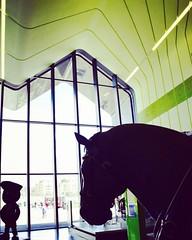 (clarodo87) Tags: horse silhouette glasgowriversidemuseum