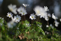 Rotterdam 10-04-2016 SM-25 (Pure Natural Ingredients) Tags: park flowers holland garden spring nikon d70 nederland thenetherlands sigma f18 f28 bloemen euromast zuid 105mm niceweather voorjaar schoonoord d90 50mmoutdoor botanicbotanishetuin