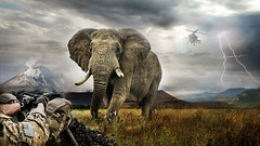 Crazy Elephant -Fotomontaje (Agustin C. Barranco) Tags: photoshop fotomontaje photoshopcreativo
