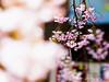 上野公園 (紅襪熊(・ᴥ・)) Tags: park travel pink flowers trees light sky white plant flower macro tree castle nature japan garden cherry tokyo spring blossom bokeh blossoms sigma olympus apo 桜 cherryblossom 日本 sakura cherryblossoms 花 f28 cherrytree e30 cherrytrees 櫻花 春 櫻 cherryblossomfestival さくら 花見 サクラ 粉紅 上野公園 150mm sigma150mmmacro 粉 sigma150mmf28 賞櫻 150mmf28 枝垂櫻 sigmamacro150mmf28 sigmaapomacro150mmf28