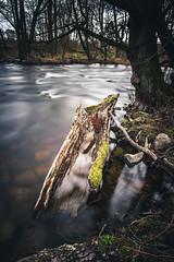 A walk along the Creek (Magnus Eriksson75) Tags: longexposure water creek river skne spring sweden samsung nordic sverige samyang nymlla nx500 skrben